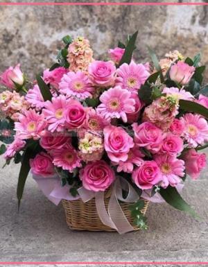Mùa yêu - D90820 - xinhtuoi.online