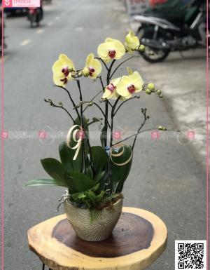 Phú quí - D90836 - xinhtuoi.online