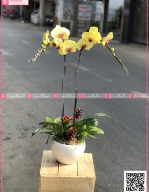 Phú quí - D90838 - xinhtuoi.online