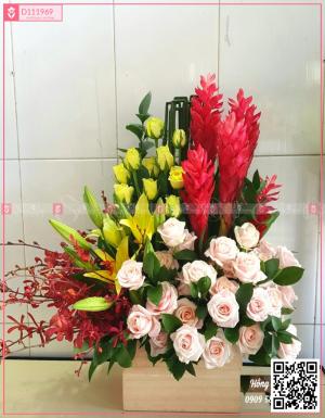 Đông sang - D111969 - xinhtuoi.online