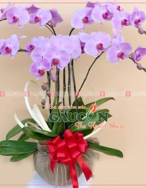 Chậu Hoa Khai Trương - D112190 - xinhtuoi.online