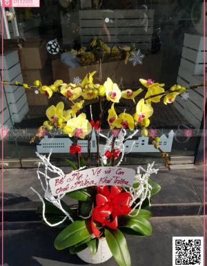 Chậu Lan Hồ điệp - D112201 - xinhtuoi.online