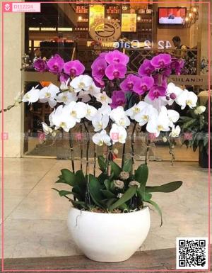 Tài lộc - D112224 - xinhtuoi.online