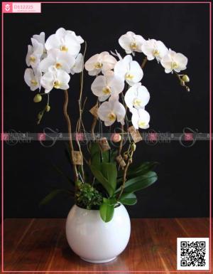 Lộc phát - D112225 - xinhtuoi.online