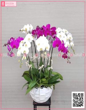 Phú ý - D112226 - xinhtuoi.online