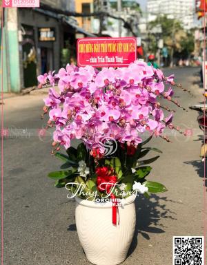 Hạnh phúc - D120500 - xinhtuoi.online