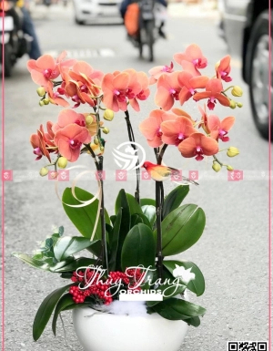 Lộc phát - D30158 - xinhtuoi.online
