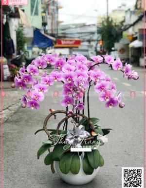 Đại lộc - D30177 - xinhtuoi.online