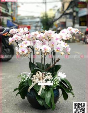 Đại lộc - D30159 - xinhtuoi.online