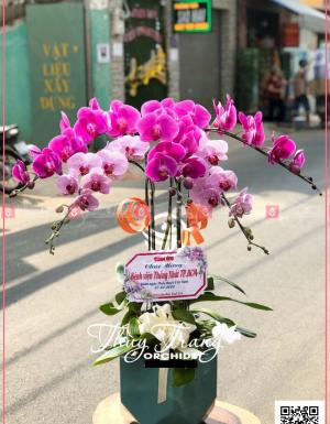 An khang - D120490 - xinhtuoi.online