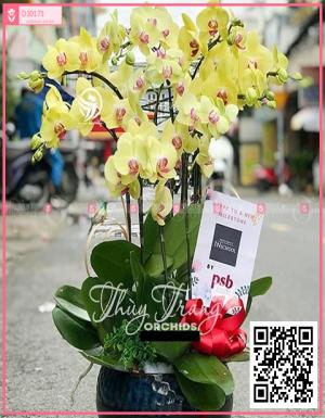 Thịnh vượng - D30171 - xinhtuoi.online
