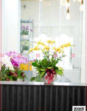 Chậu Lan Hồ điệp - D124592 - xinhtuoi.online
