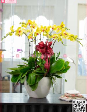 Chậu Lan Hồ điệp - D124600 - xinhtuoi.online