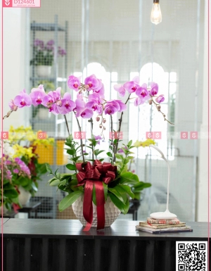 Chậu Lan Hồ điệp - D124601 - xinhtuoi.online