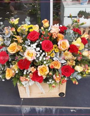 Hoa Chúc Mừng - D124615 - xinhtuoi.online