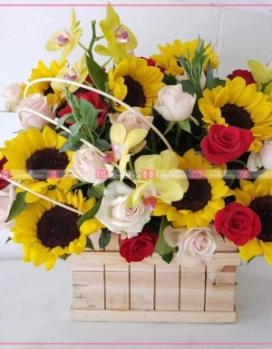 Hoa Chúc Mừng - D124619 - xinhtuoi.online