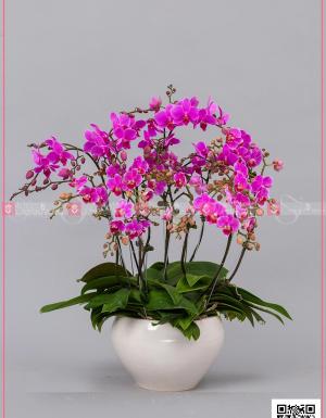 Đại lộc - D128733 - xinhtuoi.online