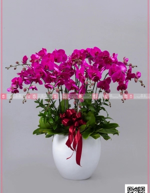 Phú quí - D128734 - xinhtuoi.online