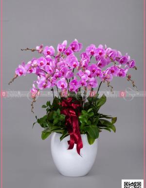 An khang - D128735 - xinhtuoi.online
