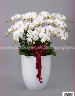 Khai xuân - D128736 - xinhtuoi.online