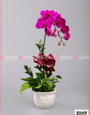 Hồ Điệp Cao Sang (01 cành) - D128743 - xinhtuoi.online
