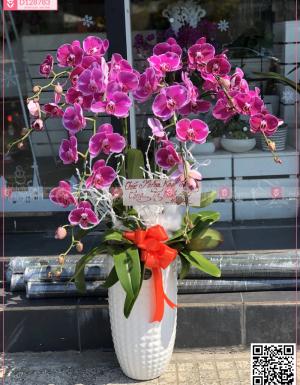 Đông sang - D128783 - xinhtuoi.online
