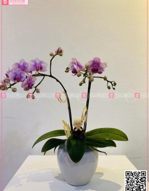 Phú ý - D165238 - xinhtuoi.online