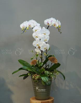 Flower Pot Flower Gift - xinhtuoi.online