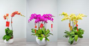 Đặt hoa lan hồ điệp tại Huyện Krông Pa, tỉnh Gia Lai - XinhTuoi.Online - xinhtuoi.online