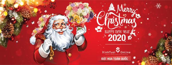 THÔNG GIÁNG SINH GIÁ CHỈ TỪ 300k- Xinh Tươi Online