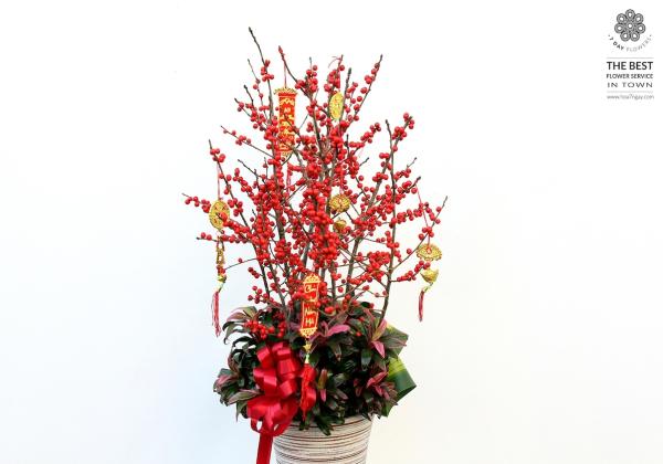 Đào đông đỏ cho năm mới trọn vẹn- Hoa 7 Ngày - xinhtuoi.online