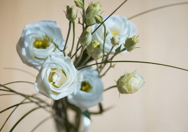 Cùng Hoa 7 Ngày ngắm sắc hoa mùa xuân dịp cận Tết - xinhtuoi.online
