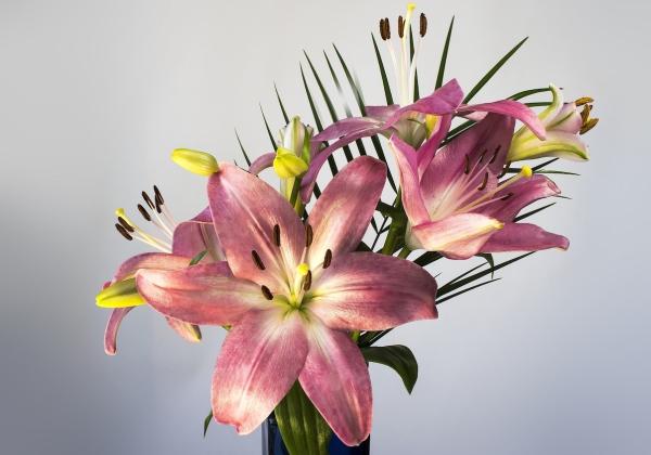 Những loại hoa tết đẹp cho ngày xuân rộn ràng- Hoa 7 ngày - xinhtuoi.online