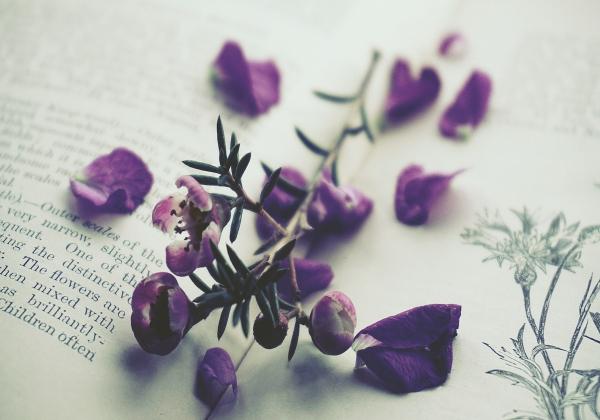 5 loại hoa tình yêu được ưu chuộng nhất trên thế giới</h3> Hoa 7 ngày - xinhtuoi.online