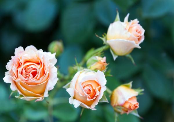 Mua hoa đẹp cho mùa đẹp nhất trong năm - Hoa 7 Ngày - xinhtuoi.online