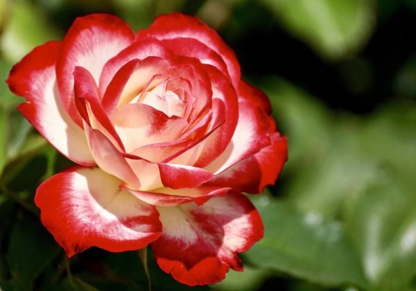 Khám phá công dụng bất ngờ từ hoa tươi - Hoa 7 Ngày - xinhtuoi.online