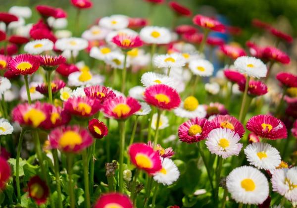 Mua hoa liền tay, nhận ngay may mắn! - Hoa 7 Ngày - xinhtuoi.online