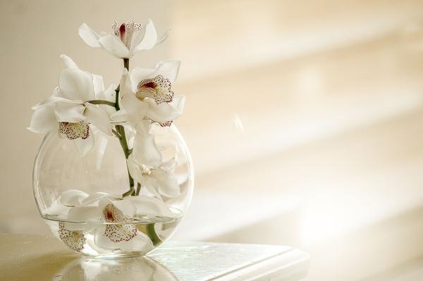 Ý nghĩa độc đáo màu sắc hoa Lan Hồ Điệp- Xinh Tươi Online  - xinhtuoi.online