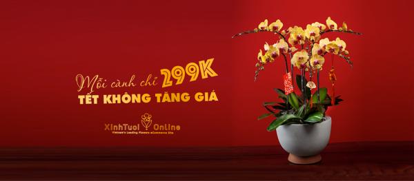 Lan hồ điệp tết 2020 giá chỉ 299k/ 1 cành- Xinh Tươi Online - xinhtuoi.online