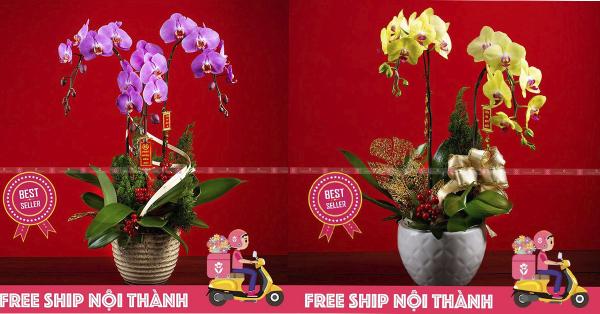 Những địa chỉ mua hoa Lan Hồ Điệp giá rẻ tại TP.HCM?- XinhTuoi.Online