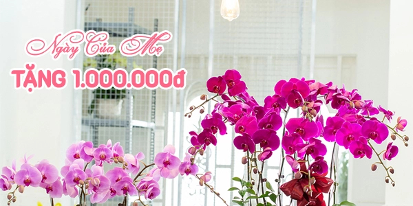 Mua hoa tặng Ngày của Mẹ - Nhận quà khủng 1.000.000đ