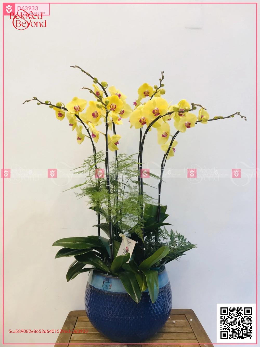 Phú ý - D63933 - xinhtuoi.online