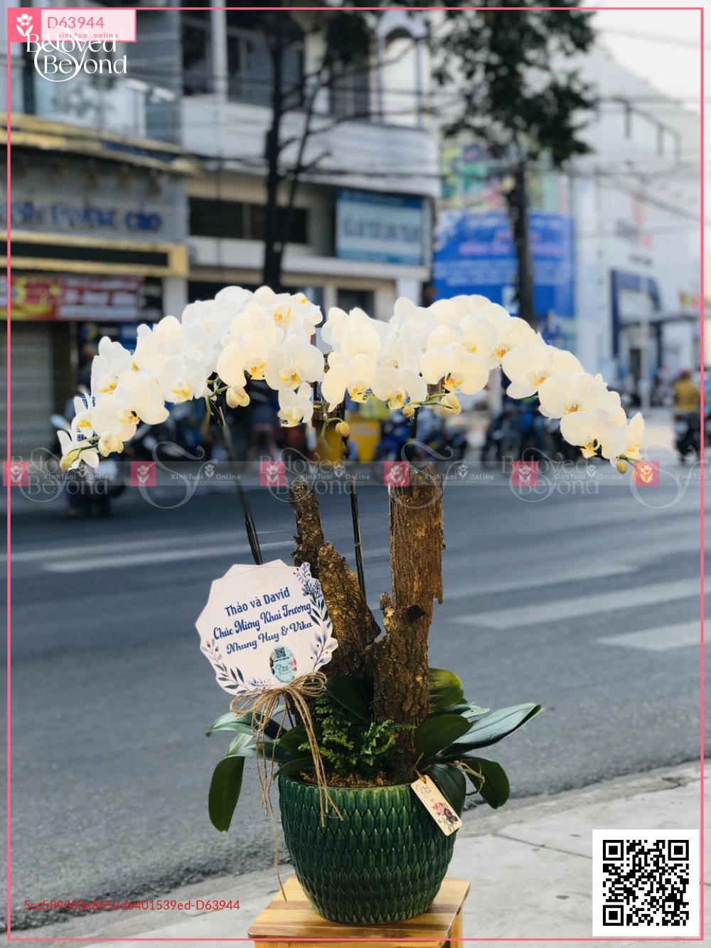 Phú ý - D63944 - xinhtuoi.online