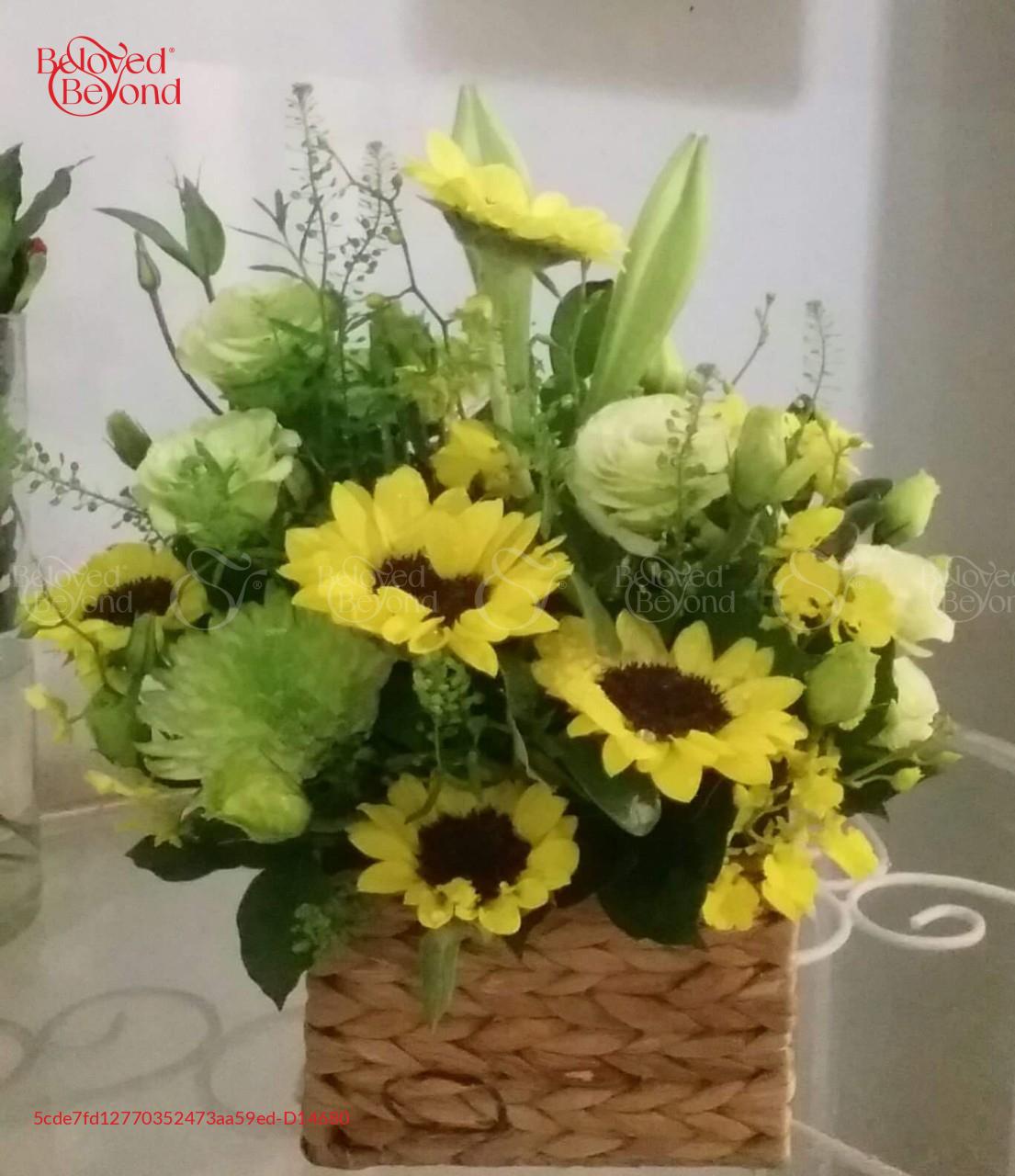 Hi vọng Xanh - D14680 - xinhtuoi.online