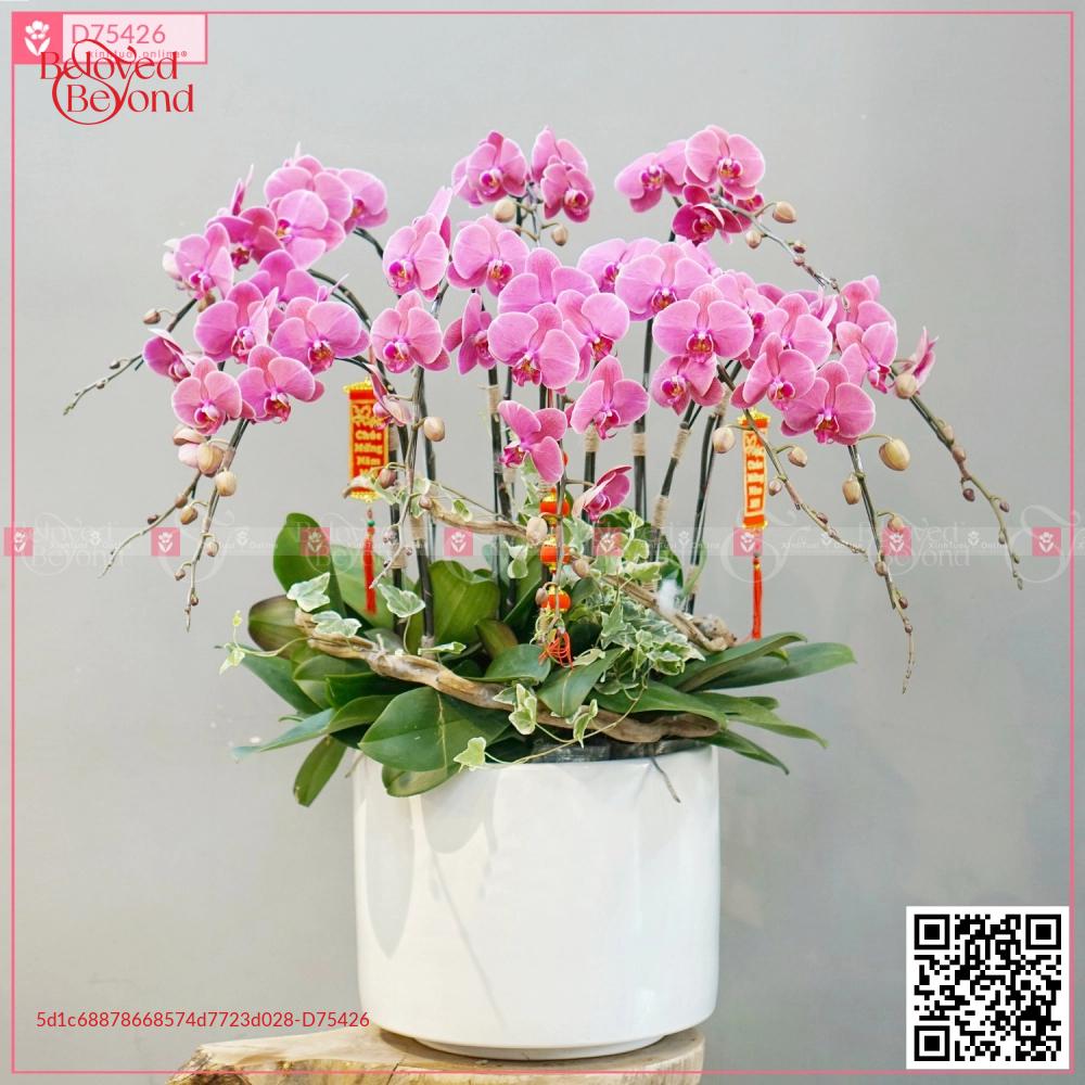 Lan Hồ Điệp 1576 - D75426 - xinhtuoi.online