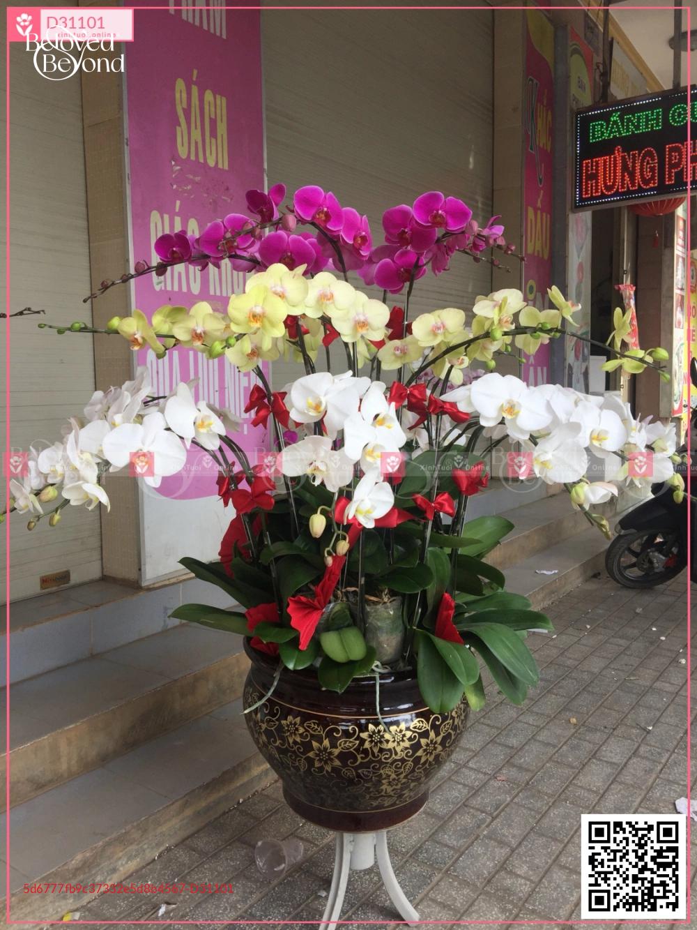 Lan hồ điệp ghép chậu lớn - D31101 - xinhtuoi.online