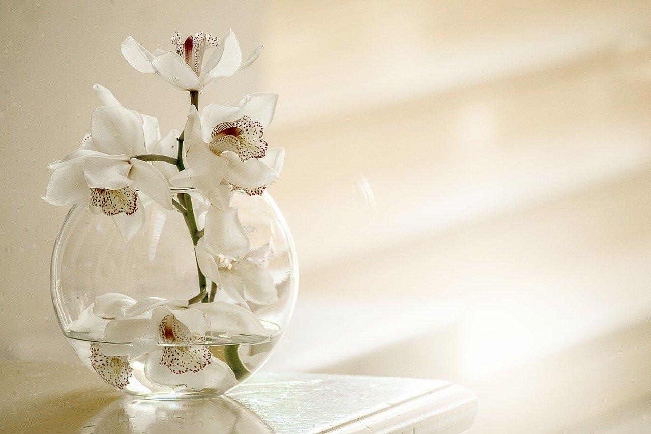 Ý nghĩa độc đáo màu sắc hoa Lan Hồ Điệp- Xinh Tươi Online