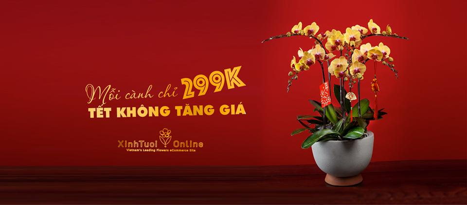 Lan hồ điệp tết 2020 giá chỉ 299k/ 1 cành- Xinh Tươi Online