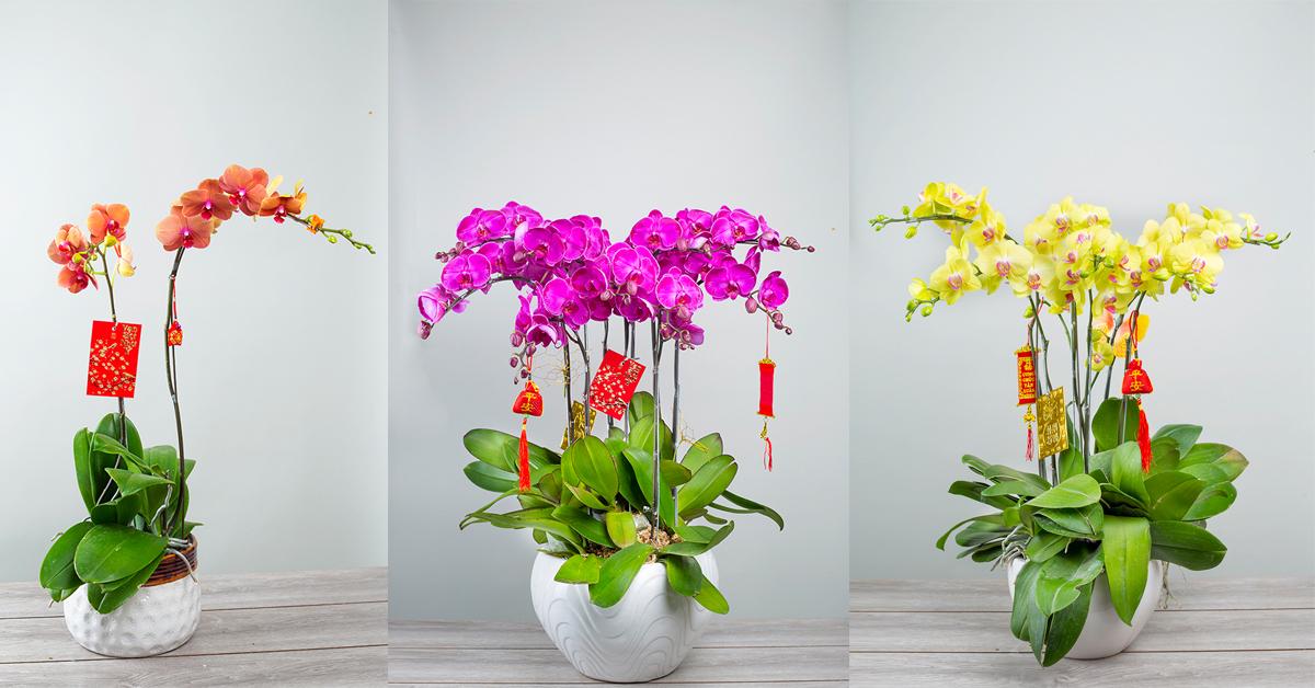 Đặt hoa lan hồ điệp tại Huyện Krông Pa, tỉnh Gia Lai - XinhTuoi.Online