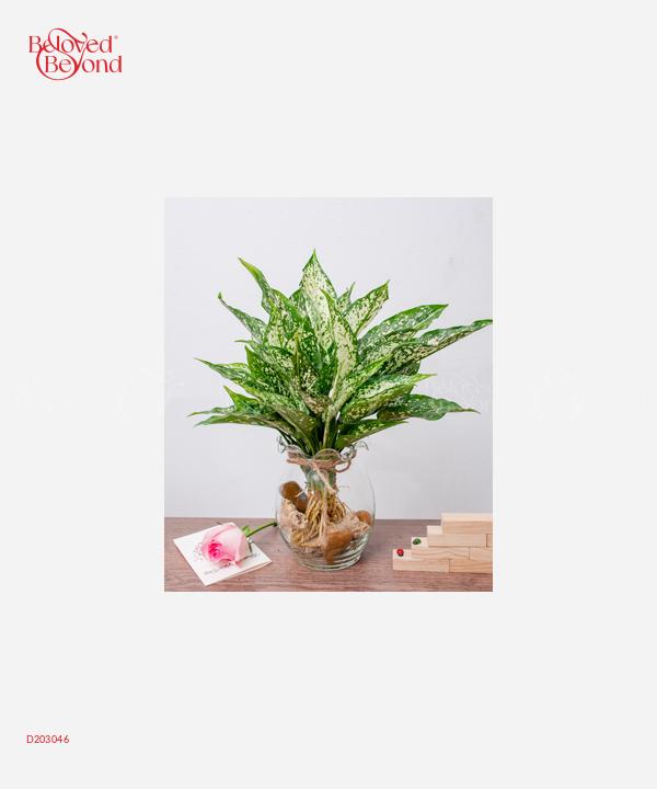 TS Ngọc Ngân - D203046 - xinhtuoi.online